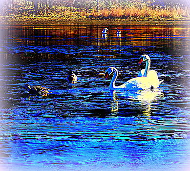 When It Seems Like The Swans Are Ruling The Sea  by Hilde Widerberg