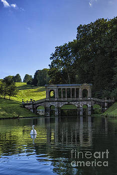 Swan in Prior Park by Margie Hurwich