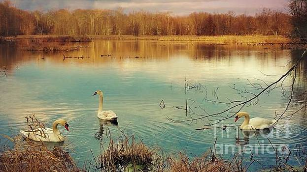 Swan Lake by Beth Ferris Sale