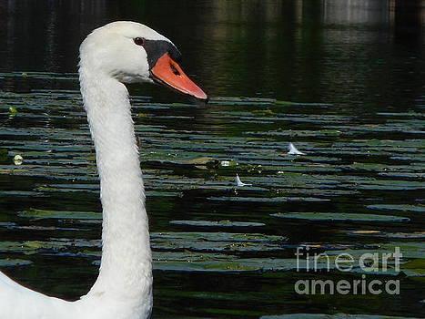 Swan Lake by Tara Lynn