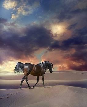 Swan Of Desert by Dorota Kudyba