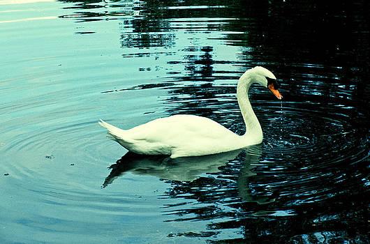 TONY GRIDER - Swan