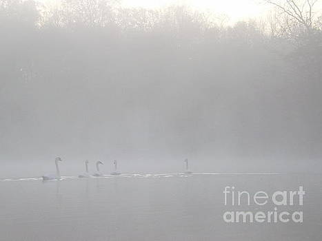 Swans in the Mist by Gerald Strine