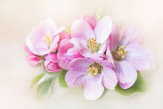 Sweet Apple Blossom by Jacky Parker