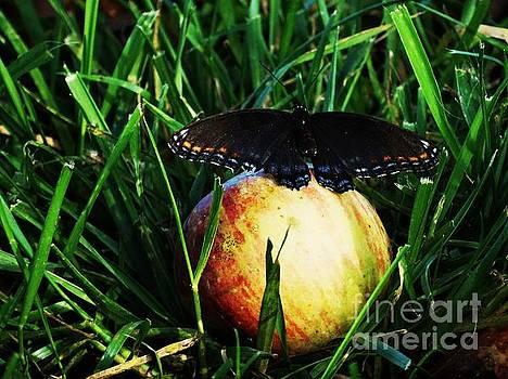 Sweet Beauty  by J L Zarek