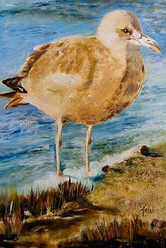 Sweet Gull Chick by Arlen Avernian Thorensen
