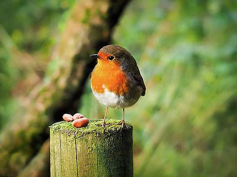 Sweet Little Robin by Susie Peek