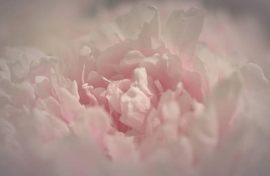 Sweet Melody by The Art Of Marilyn Ridoutt-Greene