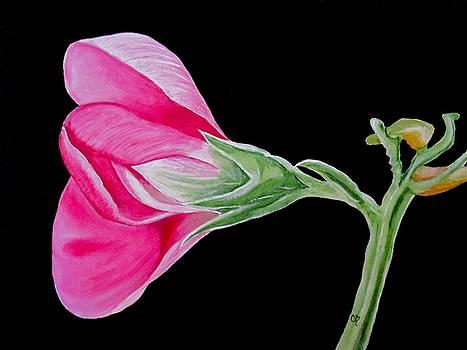 Sweet Pea by Carol Blackhurst