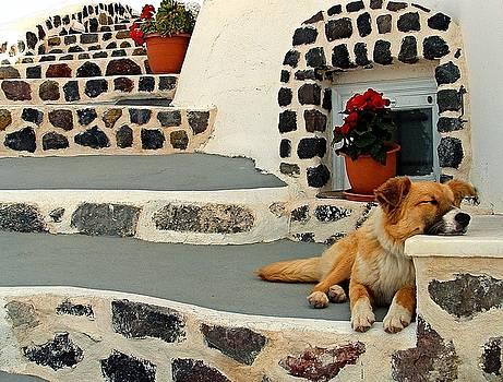 Sweet Stray in Santorini by Josephine Benevento-Johnston