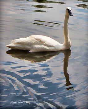 Joann Copeland-Paul - Swimming Swan