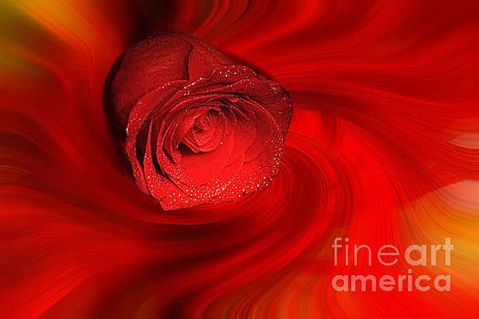 Swirling Rose by Geraldine DeBoer