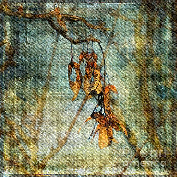 Sycamore Seeds by Liz Alderdice
