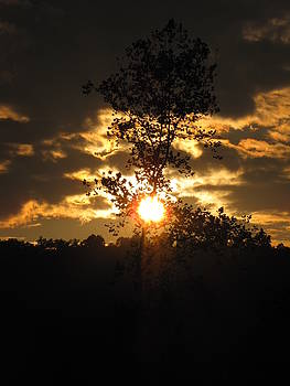 Shane Brumfield - Sycamore Sunset