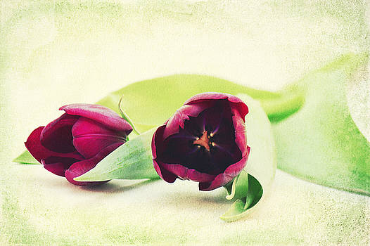 Angela Doelling AD DESIGN Photo and PhotoArt - Symphony of Tulips