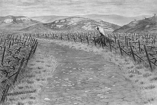 T 0002 Vineyard R01 by Bojan Sucevic