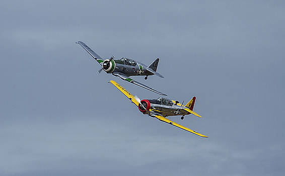 T-6 trainers by Elvira Butler