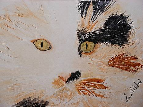 Tabby Cat by Lucia Del