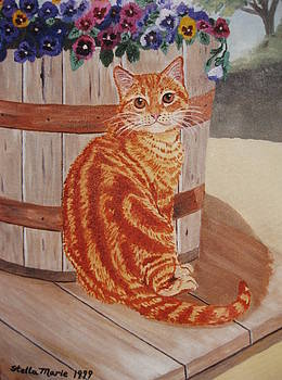Stella Sherman - Tabby Cat
