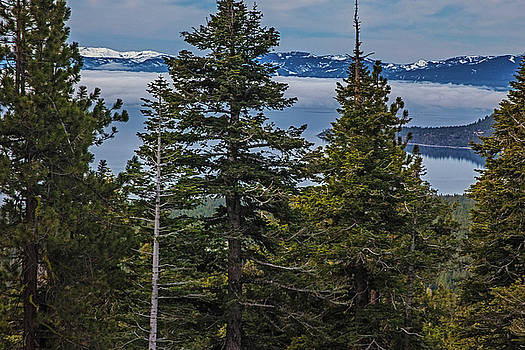 Tahoe Though The Fog by Nancy Marie Ricketts