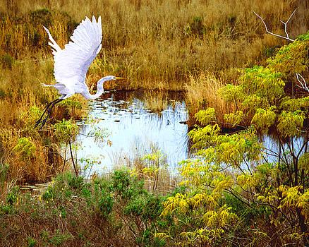 Take Flight by Adele Moscaritolo