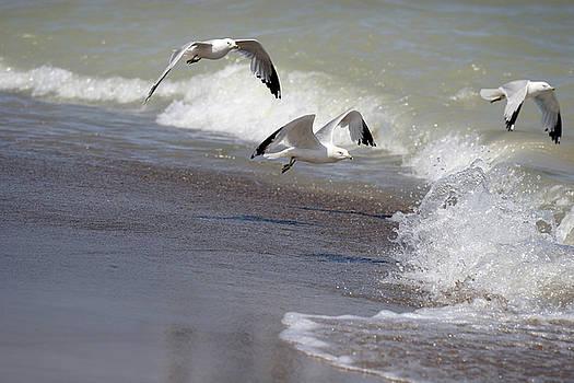 Take Flight by Jeannie Burleson
