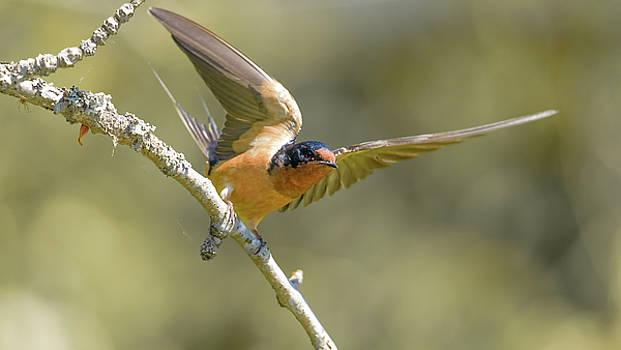 Take off by Kathy King