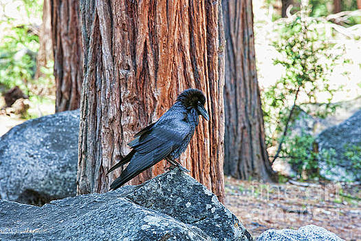 Chuck Kuhn - Taking a break  Yosemite