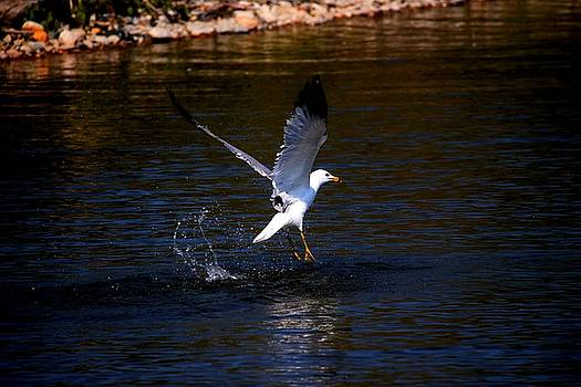 Taking Flight by Amanda Struz