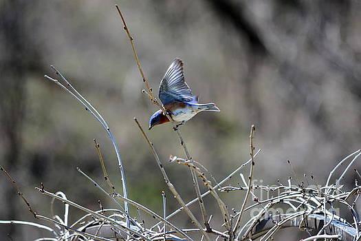 Taking Flight by Brenda Bostic