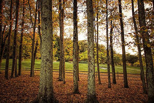 Tall Autumn Yellow by Victoria Winningham