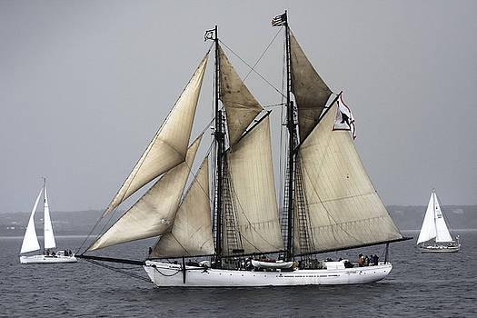 Tall Ship by Dapixara Art