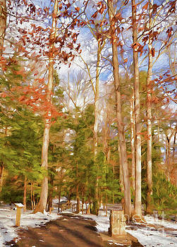 Tall Trees in Winter by Kerri Farley