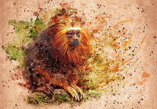 Svetlana Sewell - Tamarin Lion Monkey