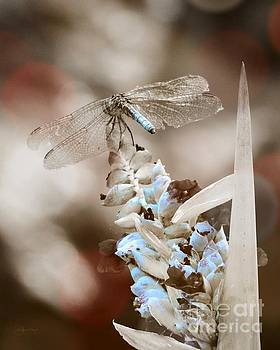 Tattered Wings B1 by Robert ONeil