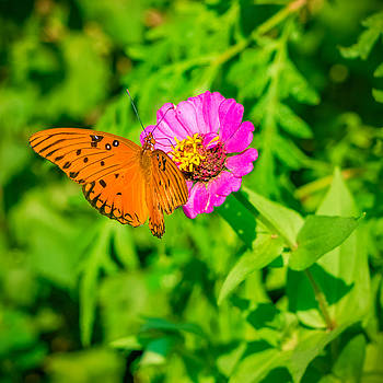 Teacup the Butterfly by Ken Stanback