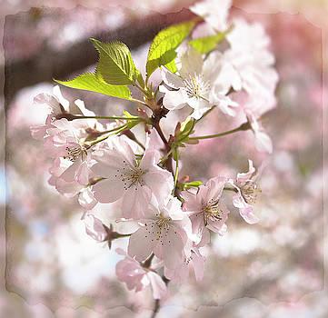 Tender Blossoms by Spokenin RED
