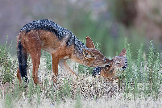 Tender loving care by Jean-Luc Baron