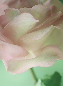 Tender Soft Charm by The Art Of Marilyn Ridoutt-Greene