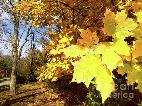 Tennessee Trees 2 by Jeanne Forsythe