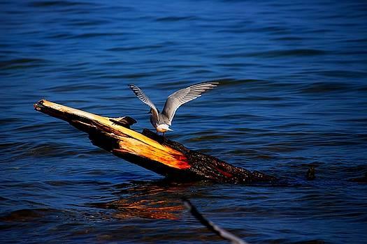 Tern Around by Amanda Struz