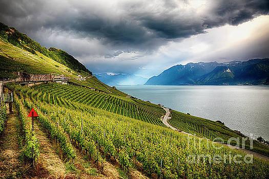 Terraced Vineyard Overlooking Lake Geneva by George Oze