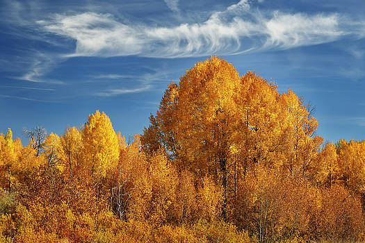 Teton in Fall Splendor D3431 by Wes and Dotty Weber