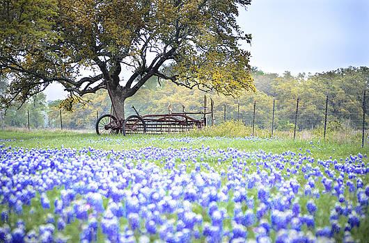 Texas Bluebonnet Morning by Debbie Karnes