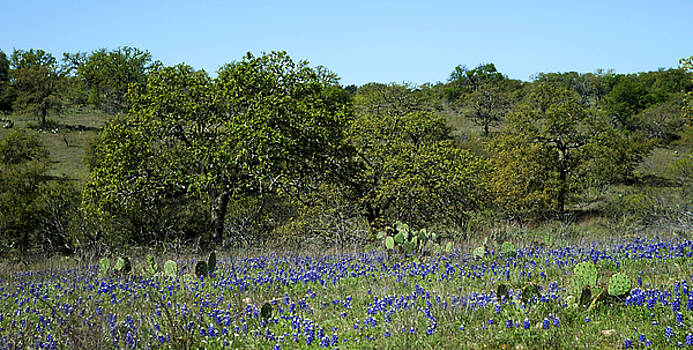 Texas Hill Country Spring by Bill Morgenstern
