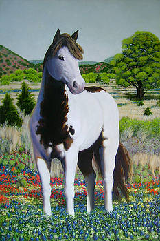Texas Hill Country Stallion by Charles Wallis