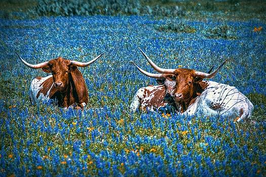 Texas in Blue by Linda Unger