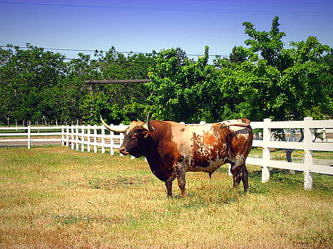 Joyce Dickens - Texas Longhorn On The Hoof