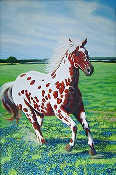 Texas Red Appaloosa by Charles Wallis