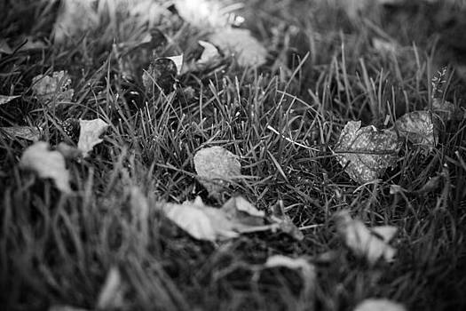 Textural Grass and Leaves by Sharon Wunder Photography